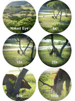 rifle scope range