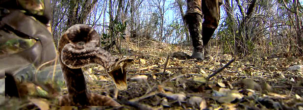 BitingSnake in woods