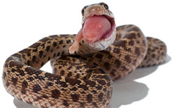 eating snake
