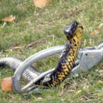 snake-handling-how-to-example