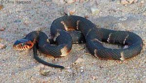 snake body language