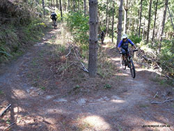 Sunny bike trail in forest