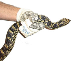 holding a snake with hands