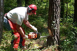 logger with chainsaw at work