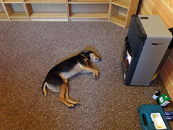 dog in front of airconditioning
