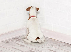 dog stains wall